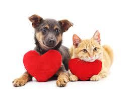 Valentine's Day Pet Safety